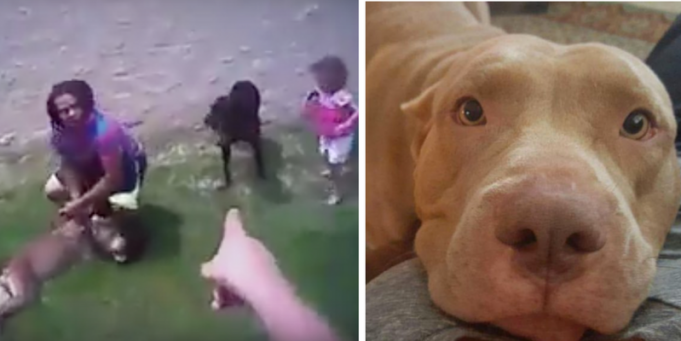 US Cop shouts 'come here puppy' at family dog, claps and whistles to lure it, then shoots it dead [Video]