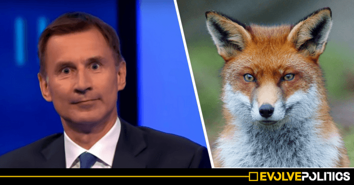 Tory Leadership Candidate Jeremy Hunt pledges to legalise fox hunting if he becomes Prime Minister