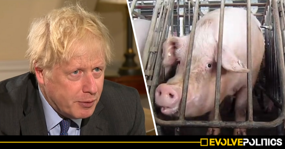 Tories vote down amendment to protect Food and Animal Welfare standards from post-Brexit Trade Deals
